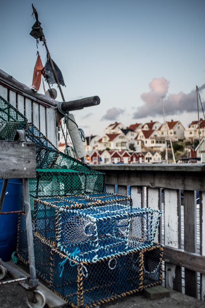 ... lobster traps I ...