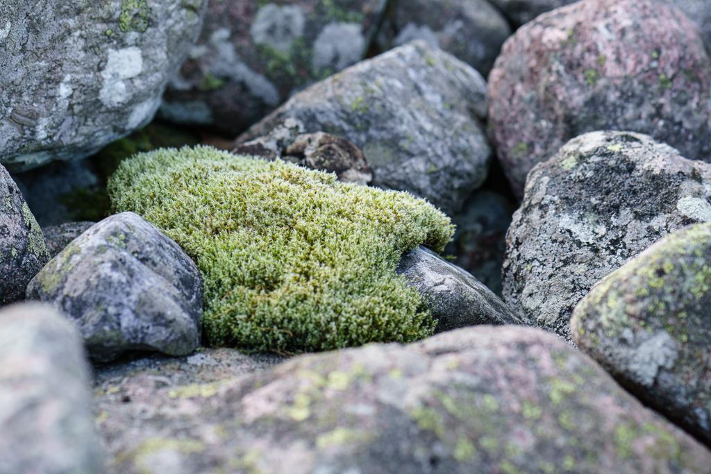 ... swedish moss ...