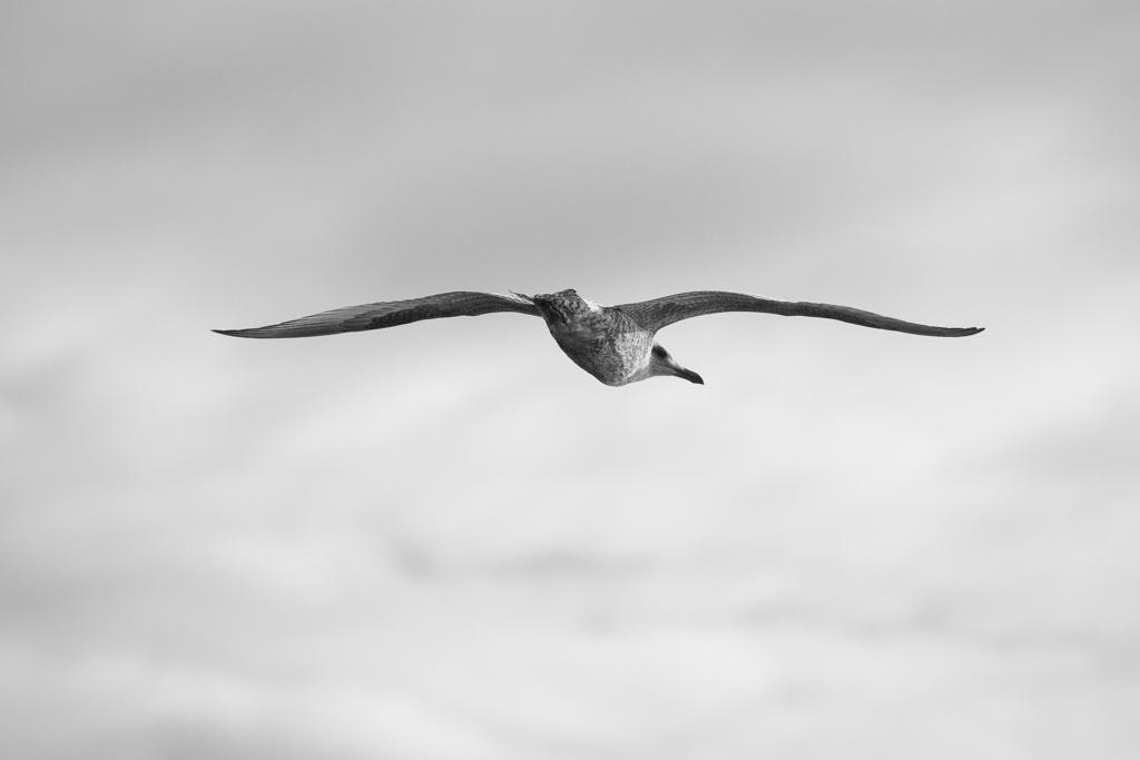 ... seagull I ...