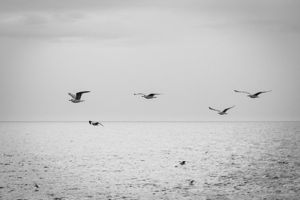 ... seagulls ...